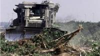 Siyonist İşgal Güçleri Beytlahim'de Tarım Arazilerini Tahrip Etti