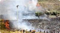 Siyonist Yerleşimciler Burin'de Tarım Arazilerini Telef Etti