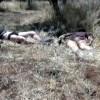 Suriye Ordusu, Dera'da teröristlere ait 6 aracı imha etti: 130 terörist öldü