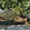 Eski Esirlerden İbrahim Buradiye Adlı Filistinli Şehid Edildi