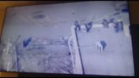 Video: Irak ordusu Ramadi'yi tamamen aldı