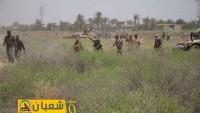 IŞİD Felluce'de Ağır Kayıplar Veriyor