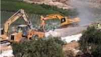 Siyonist Yerleşimciler Selfit'te 80 Zeytin Ağacını Telef Etti