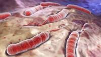 Yemen'deki kolera salgını hızla yayılıyor