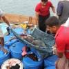 Suudi Rejimi Yemen Sahillerinde Somalilere Ait Tekneyi Bombaladı: 34 Ölü