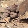 Yemen Hizbullahı Onlarca Suud Askeri Ve İşbirlikçi Münafığı Öldürdü