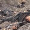Irak Ordusundan tekfirci teröristlere büyük darbe: 150 ölü
