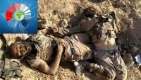 Halep kırsalı Kveyris Askeri Havalimanı civarında bugün öldürülen onlarca tekfirciden birkaçı…