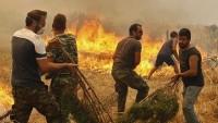 Yunanistan'da bir İngiliz, ormanı yakarken suçüstü yakalandı
